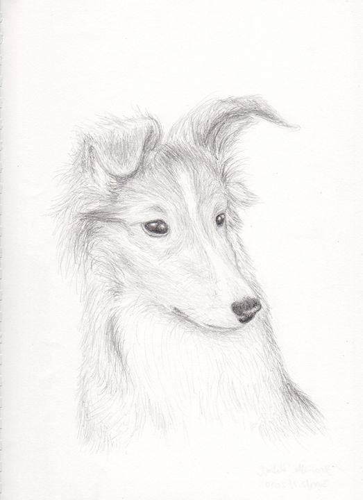 Shetland Sheepdog Puppy - JK Art Life
