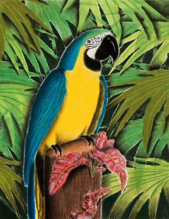 Gold and Blue Macaw - JK Art Life