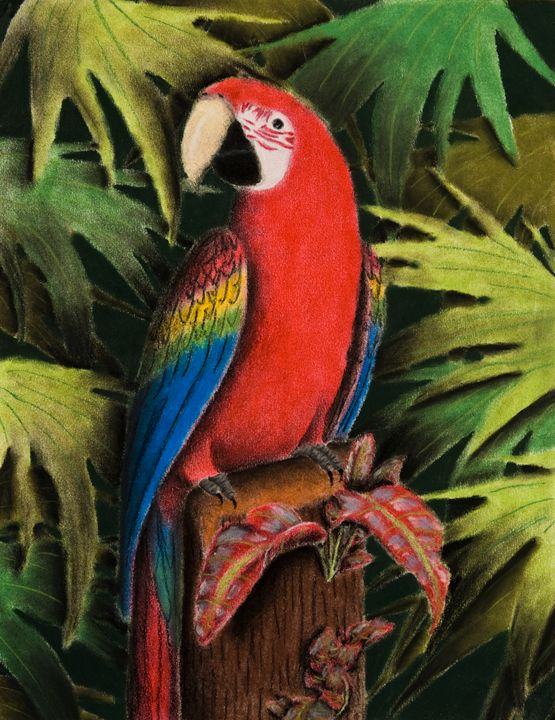 Scarlet Macaw on Stump - JK Art Life