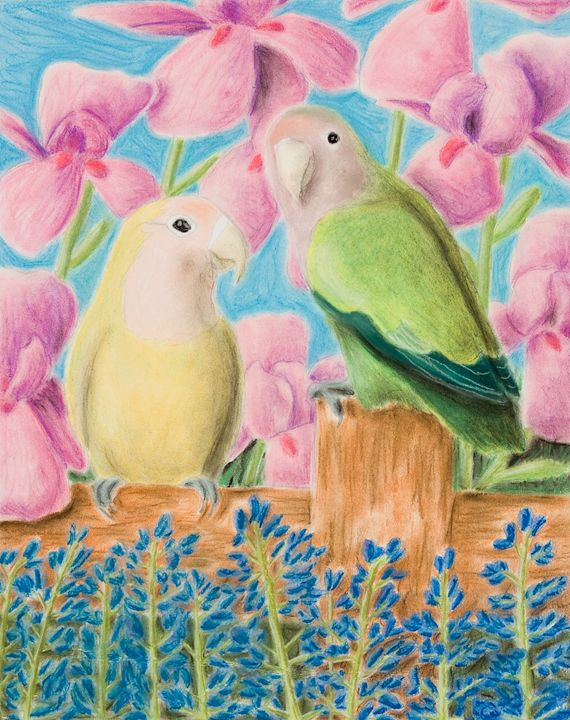 Peach-faced Lovebird - JK Art Life