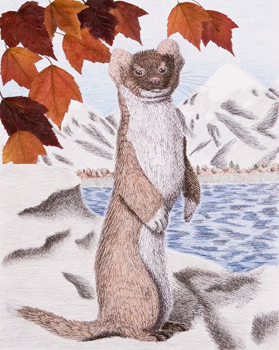 Weasel in Fall - JK Art Life
