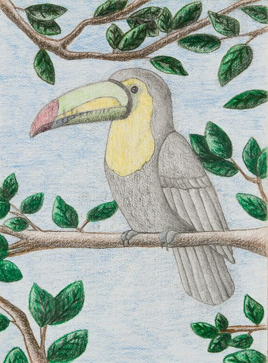Toucan - JK Art Life