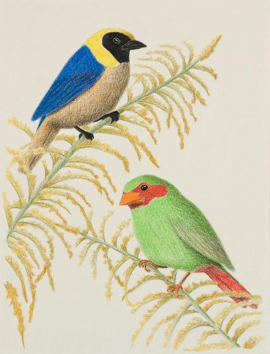Golden-collared Tanager and Grass-gr - JK Art Life