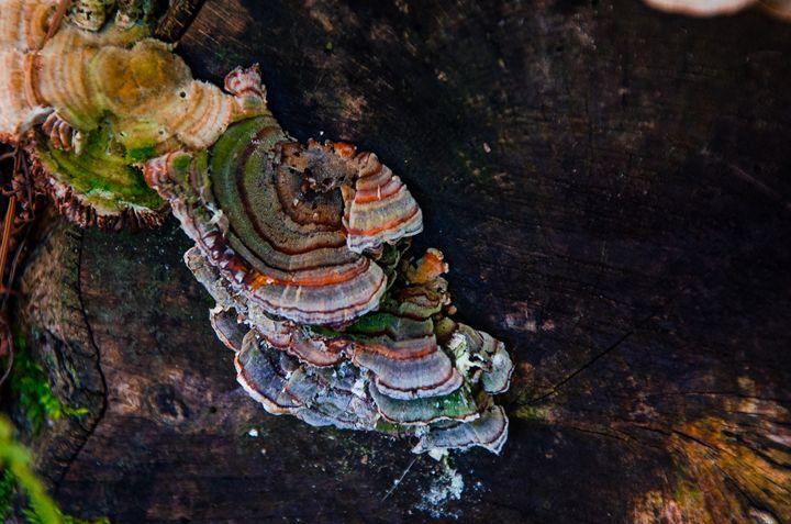 fungus - Kristina Cundiff Photography