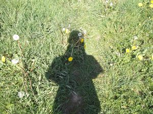 shadow on the meadows