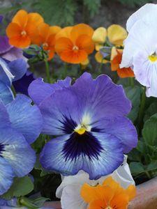 Hereford flowers