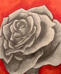 Backwards Rose