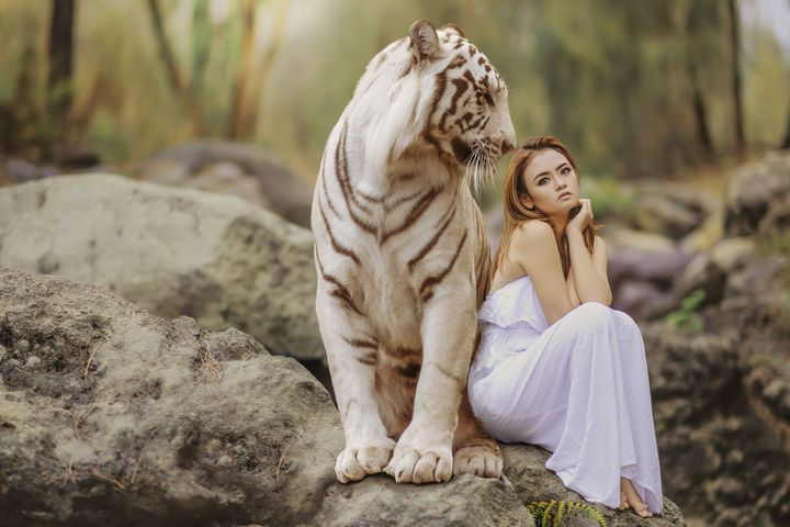 White Tiger and Girl - Amazing Photography