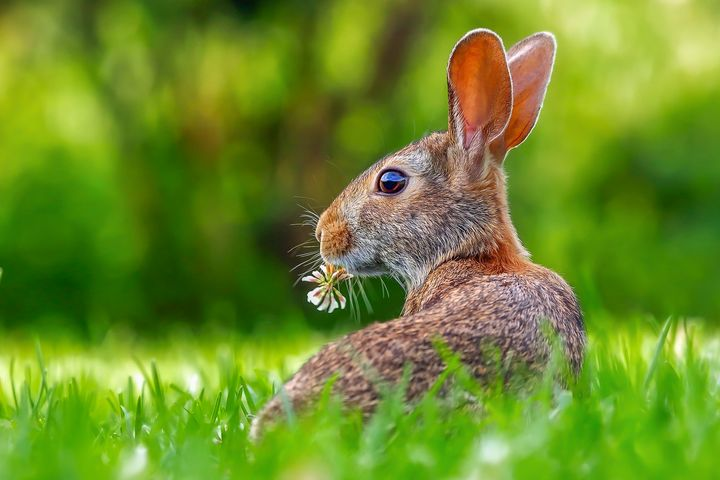 Rabbit with Clover Flower - Amazing Photography