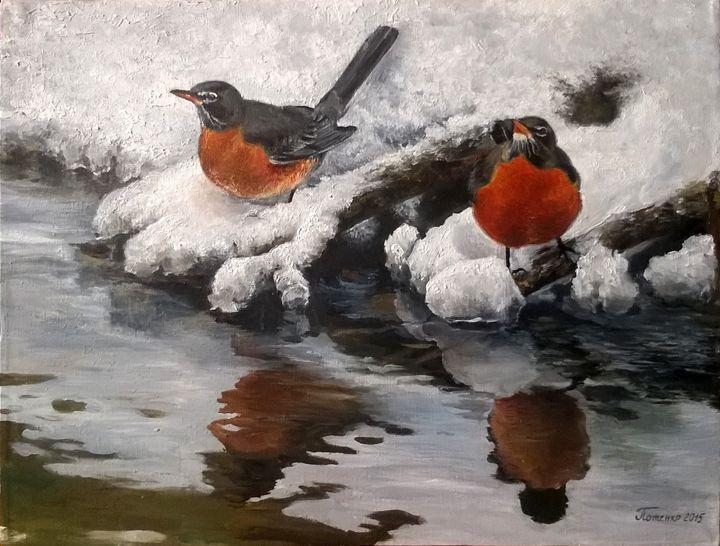 American robins - Julia
