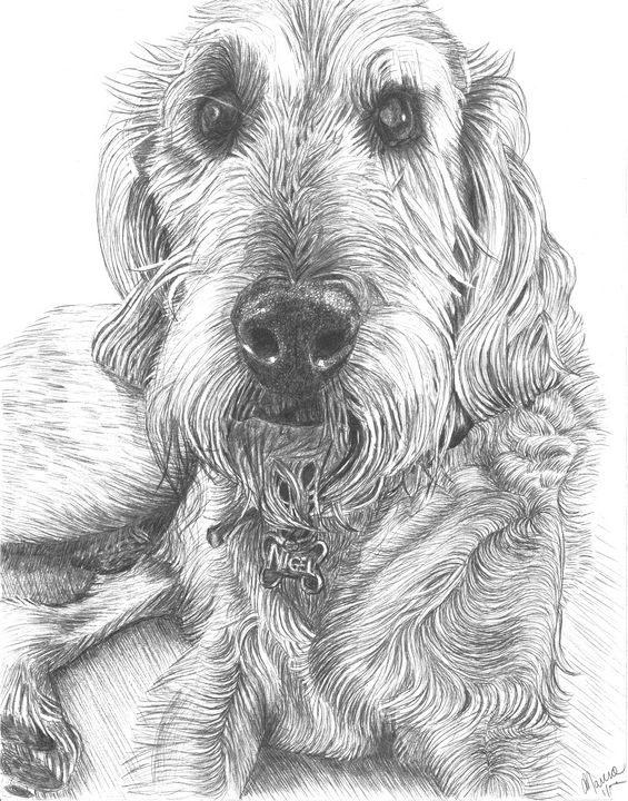 Nigel - Marcia Charity for Animals
