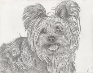 The Joyful Yorkie - Marcia Charity for Animals