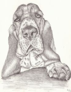 The Cantankerous Hound - Marcia Charity for Animals