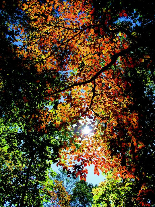 Rainbow of the Trees - DreamColor