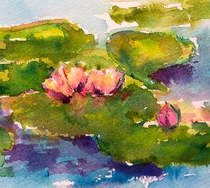 Water Lilies Little