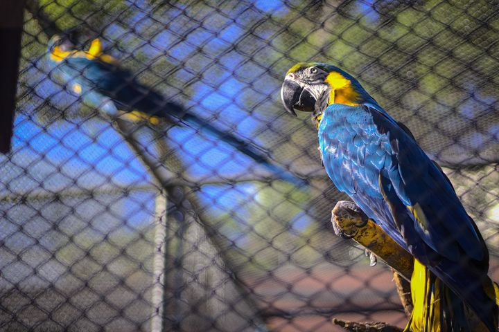 Caged macaw - World Stories
