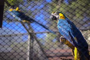 Caged macaw
