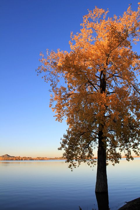 Fall in Colorado - Photos By NurseRies