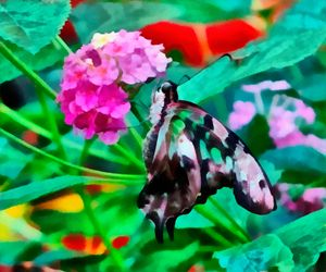 FEEDING BUTTERFLY - DIGITAL ARTOGRAPHY