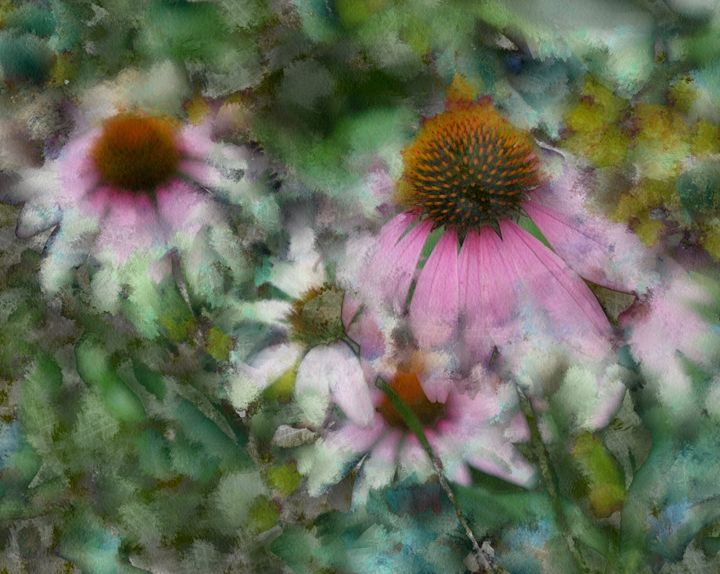 CONE FLOWERS - DIGITAL ARTOGRAPHY