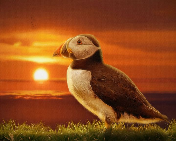 Puffin Sunset Wildlife Painting - Heart and Soul Art by Dawn Gemme