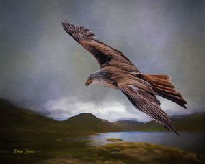 Flying Eagle Wildlife Painting