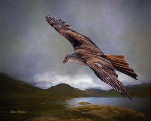 Flying Eagle Wildlife Painting