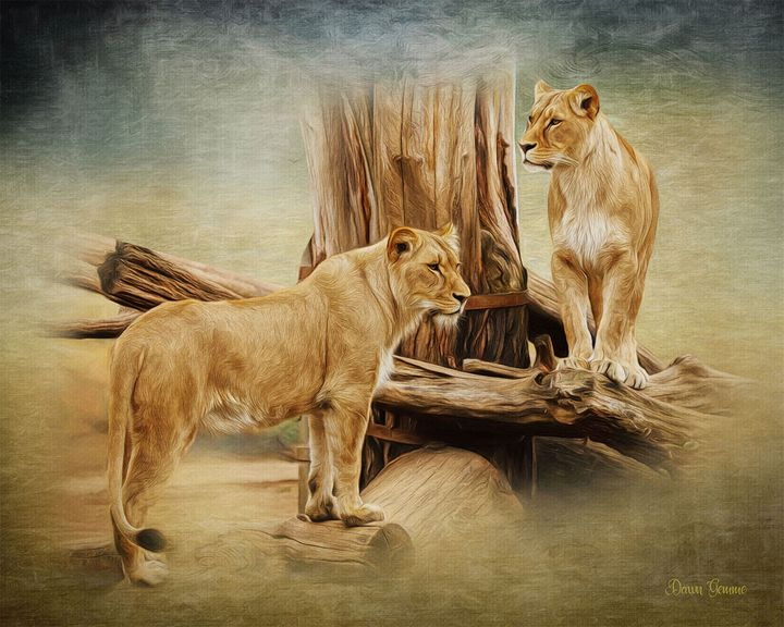 Lioness Sisters Wildlife Painting - Heart and Soul Art by Dawn Gemme