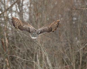 Wings of Wisdom