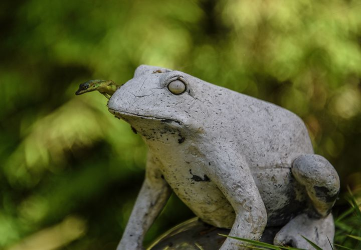 The Frog and friend - Aspen Ridge Gallery