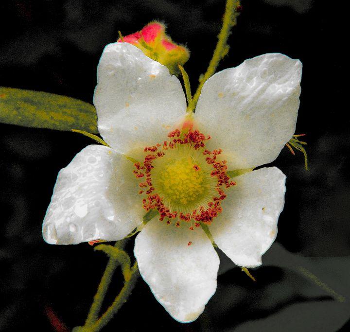 Costal Flower - Aspen Ridge Gallery