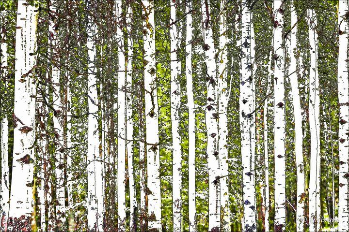 Aspen Tree Sketch - Aspen Ridge Gallery