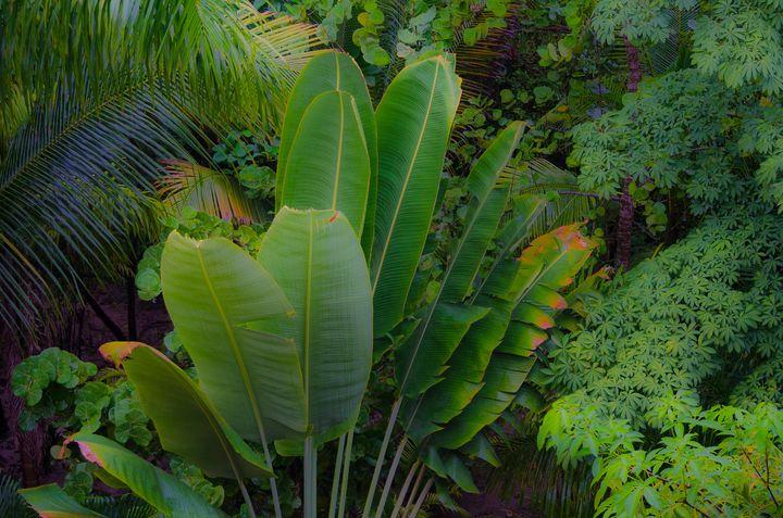 Tropical Strelitzia Leaves - Aspen Ridge Gallery