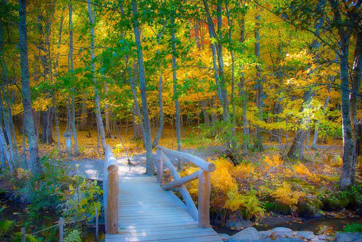 Wild Gardens of Acadia - Aspen Ridge Gallery