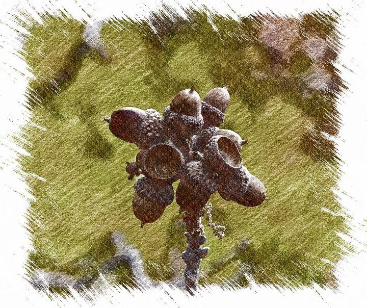 Acorn Cluster - Aspen Ridge Gallery