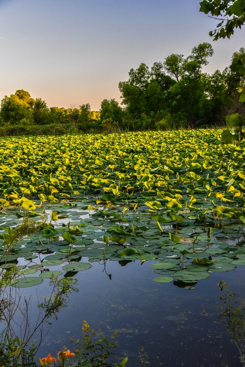 Lilly pond, Nauvoo-Mississippi River - Aspen Ridge Gallery