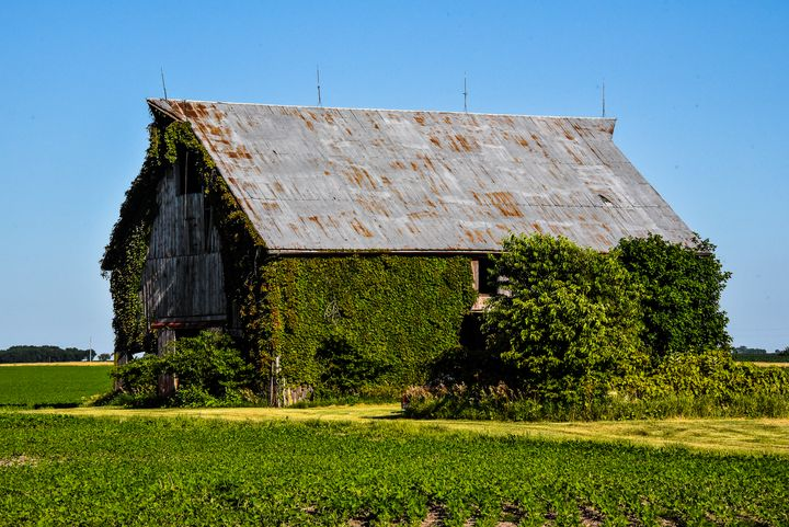 Barn at Niota, Illinois - Aspen Ridge Gallery