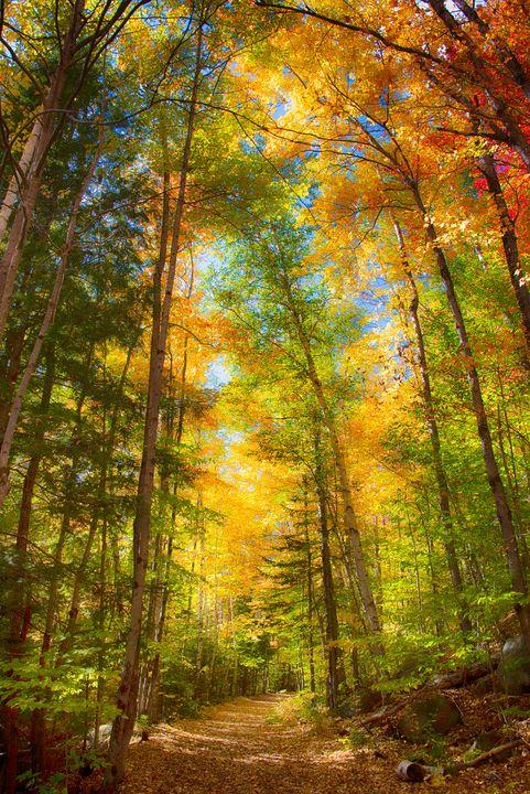 New Hampshire logging road - Aspen Ridge Gallery
