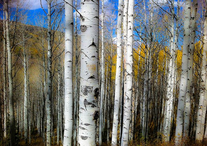 Utah Aspens - Aspen Ridge Gallery