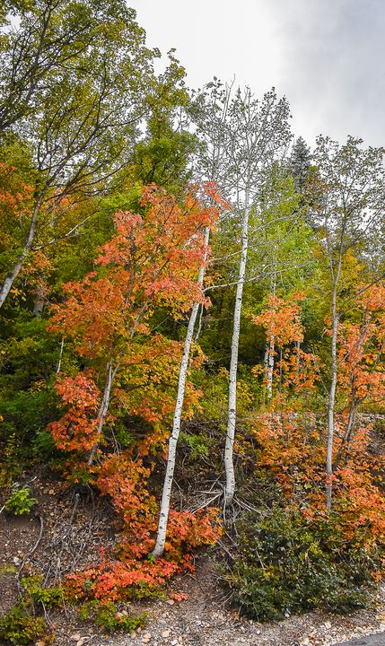 September Autumn in Midway - Aspen Ridge Gallery