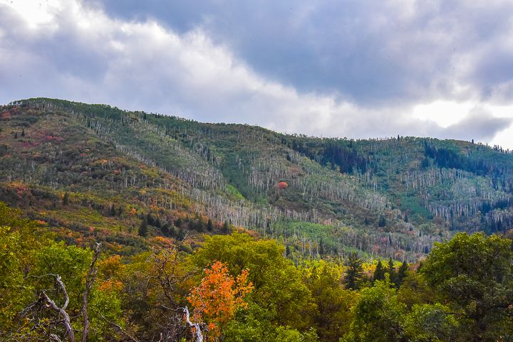 Beauty in Fall at Midway - Aspen Ridge Gallery