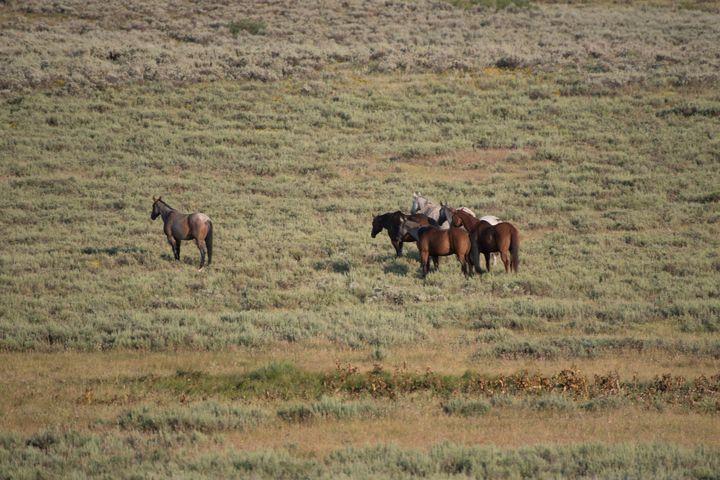 Wild Horses in the Sage - Aspen Ridge Gallery