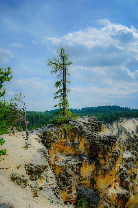 Lone Pine - Yellowstone Grand Canyon - Aspen Ridge Gallery
