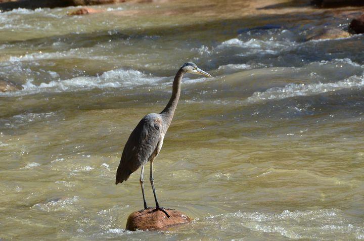 Crane at Zions National Park, Utah - Aspen Ridge Gallery