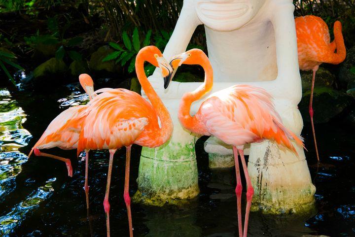 Love Birds - Aspen Ridge Gallery