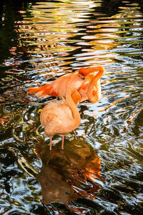 Flamingo Reflections - Aspen Ridge Gallery