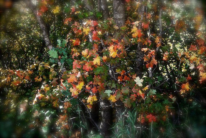 Sundance Autumn Leaves - Aspen Ridge Gallery