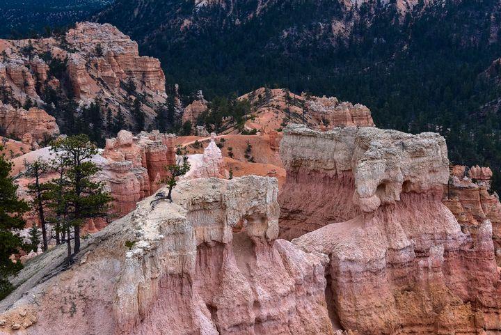 Pretty in Pink-Bryce Canyon - Aspen Ridge Gallery