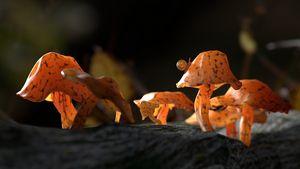 Scenery with fairy mushrooms