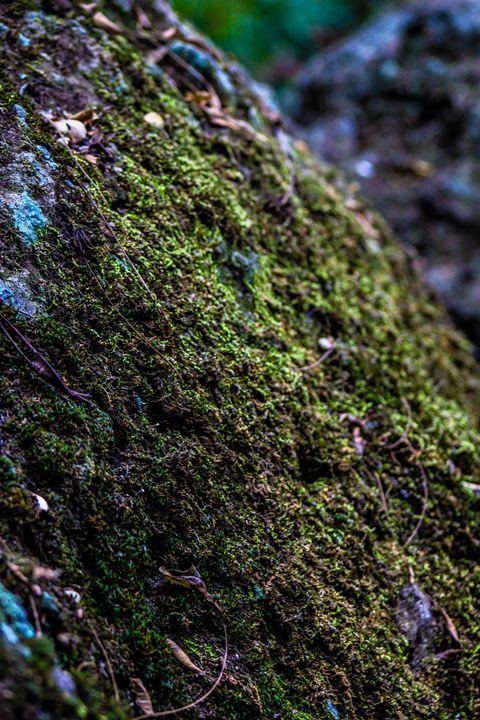 overgrowth - Nicole Ashly